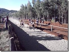 En sector de San Ramón de Ercilla inauguraron flamante cancha para carreras a la chilena