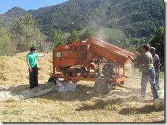 Trilladora comunitaria apoya a agricultores en zona cordillerana