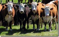 Dan a conocer estudio sobre preferencias de consumidores ante carne modificada genéticamente