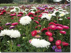 Pequeñas agricultoras mapuche se capacitan en alternativas de follajes ornamentales