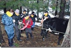 Estudiantes de la Universidad Mayor trabajaron en terreno con habitantes de Lonquimay