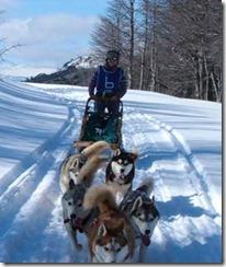 Carrera Internacional de Mushing trineos tirados por perros se dan en cita en Lonquimay