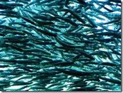Salmonicultores avanzan en Producción Limpia