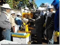 Desarrollarán primera Feria de la Miel en Villarrica