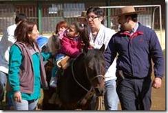 Municipio lanzó trabajo de hipoterapia en Escuela Especial Ñielol