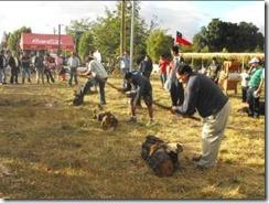 Todas las Tradiciones del Mundo Rural en la XII Muestra Campesina Villarrica 2012