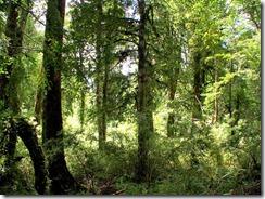 bosque_grande[1]
