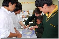 Bioquímica Millaray 1