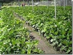Pequeños productores agrícolas