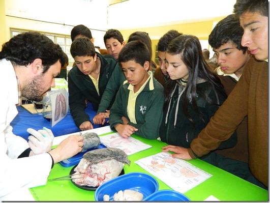Pedagogía en Ciencias en Acción 4