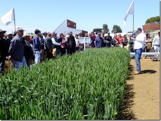 productores conociendo aspectos del rubro trigo