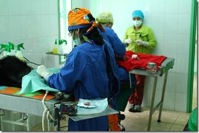 esterilizaciones (1)