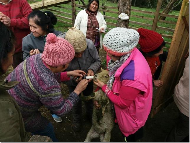 Campaña de sanidad animal invierno 2018 (3)