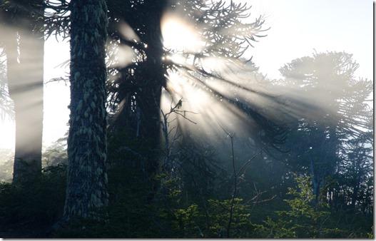 Webinar Bosques de La Araucanía