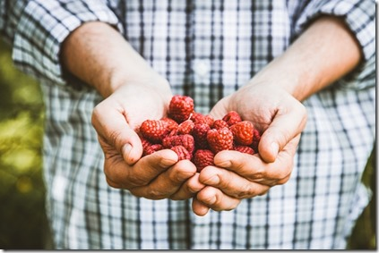 Organic fruit. Farmers hands with freshly harvested fruit. Organic raspberries. Fresh organic berries.Farming concept